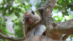 Small monkey sitting in tree Stock Footage