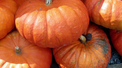 Lot of pumpkin. Stock Footage