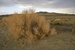 California Mojaven autiomaassa maisema Kuvituskuvat
