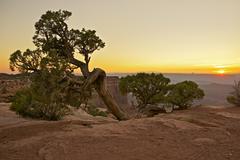 raw canyonlands flora - stock photo