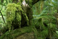 The moss - mossy olympic peninsula forest, Stock Photos