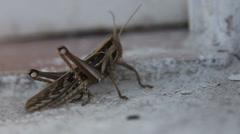 Grasshoper 4 Stock Footage