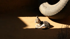 Tire-d Kitten Stock Footage