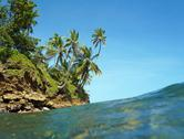 Stock Photo of coconut trees over the sea