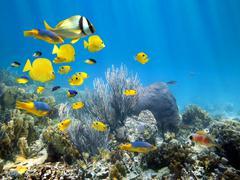 Vedenalainen koralliriutta kalalajista Kuvituskuvat