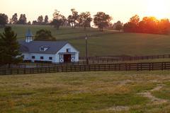 horse farm sunset - stock photo