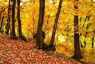 Stock Photo of Fall forest at Clamart-Meudon in France