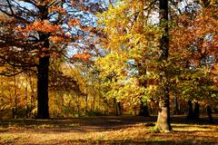 Fall forest at Clamart-Meudon in France Stock Photos