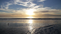 Soft rolling waves off of the pacific ocean at sunset with small bird - stock footage