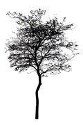 A tree is isolated on white Stock Illustration