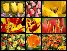 Mosaic photos of tulip flowers - stock illustration