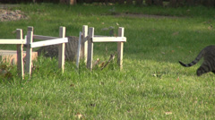 Two curious cats in the grass, backyard, funny animals looking for prey - stock footage
