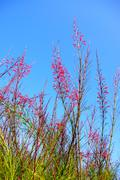 red flower with blue sky - stock photo