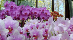 Orchids in the park Keukenhof. Stock Footage