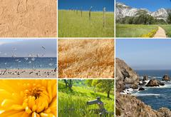 Composite of nature images Stock Illustration