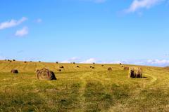Straw roll bale on the field of farmland Stock Photos
