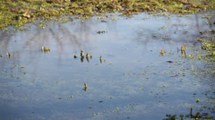 Puddle on the grass Stock Footage