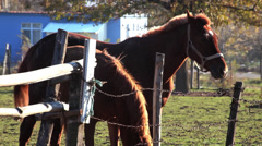 Brown horses resting at the ranch in early winter Stock Footage