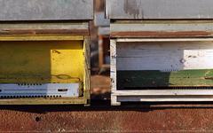 Bee colony Stock Photos