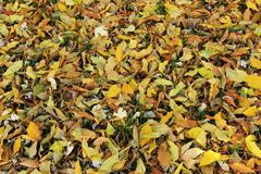 Fallen leaves on green grass Stock Photos