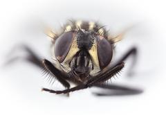 housefly magnification - stock photo