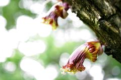 Bloom wild flora Stock Photos