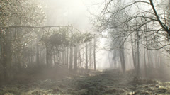 Damp, haze, mist and sunbeams in forest + zoom out - stock footage