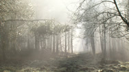 Stock Video Footage of Damp, haze, mist and sunbeams in forest + zoom out