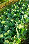 Stock Photo of fresh vegetable on ground