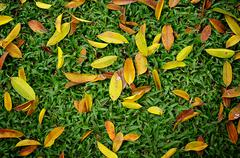 Stock Photo of leaves on green sward