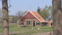 Dutch rural area near Winterswijk,  small farmhouse with geese in yard Stock Footage