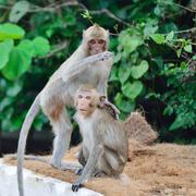 monkey wild animal - stock photo