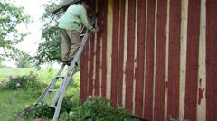 Housepainter man on ladder paint wooden garden house wall Stock Footage