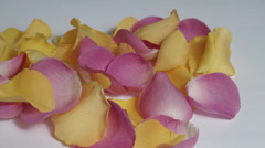 Pink and yellow rose petals turning Stock Footage
