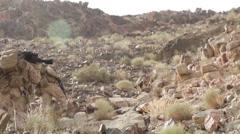 US Marines - Mountain Hike 04 - stock footage