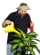 Florist watering big green plant - stock photo