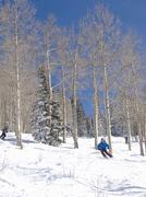 Skier moves through bare winter aspens Stock Photos