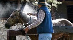 Cowboy hosing a horse Stock Footage