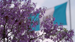 Flag of Guatemala through a tree of lilac flowers Stock Footage