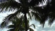 Stock Video Footage of Marco Island Palm Trees 01