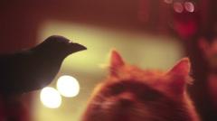 Bird cat friends best friend Stock Footage