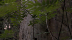 Trunk of an old tree in the forest Stock Footage