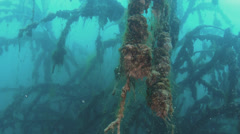 Underwater forest of trees Stock Footage