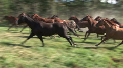COWBOYS HERDING HORSES IN ROCKY MOUNTAINS - stock footage