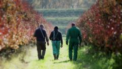 0252 Farmers walking in the orchard, after pruning Stock Footage