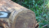Stock Video Footage of Cutting slices of wood log with a chain saw