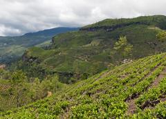 Mountainous terrain of sri lanka Stock Photos