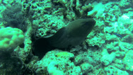 Stock Video Footage of Black fish between the rocks in Phuket