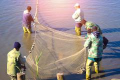 Pulling a Fishing Net - stock photo