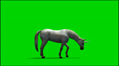 Unicorn graze  - seperated on green screen Stock Footage